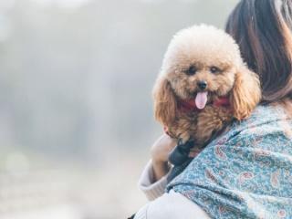 Моля, не коментирайте личния живот на кучето ми!