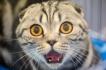 Сезонен наръчник за начинаещи коткари