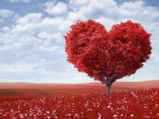 10 идеи за незабравим Свети Валентин