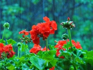 За душата на едно цвете