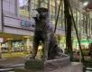 Защо Япония се справя с коронавируса