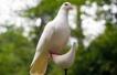 Как похитих гълъб или за влюбването като психично отклонение